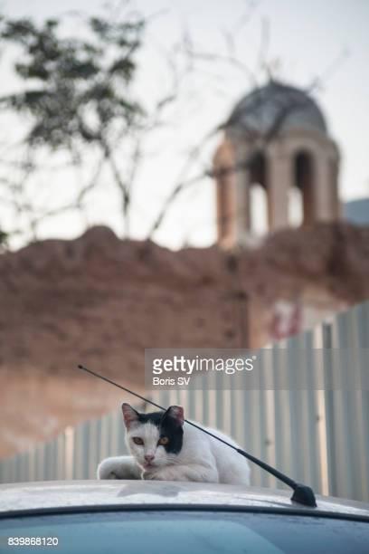 Cat resting on a car in Cyprus, church in the background