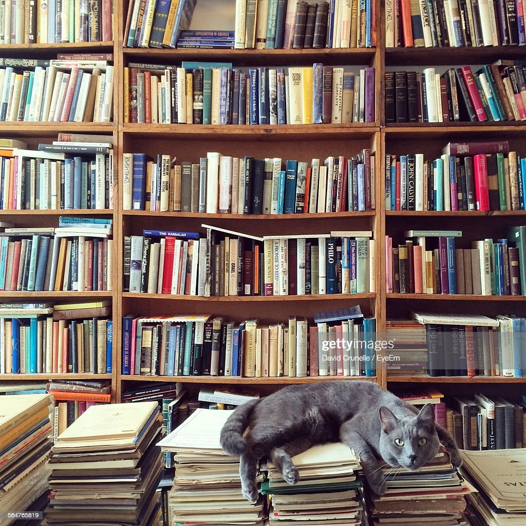 Cat Resting On Books In Library : Stock Photo