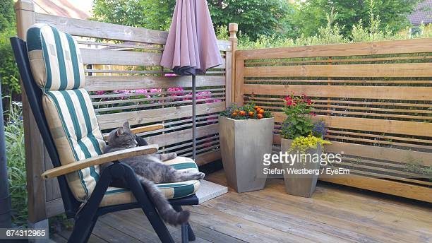 Cat Resting On Chair By Flower Pots In Balcony