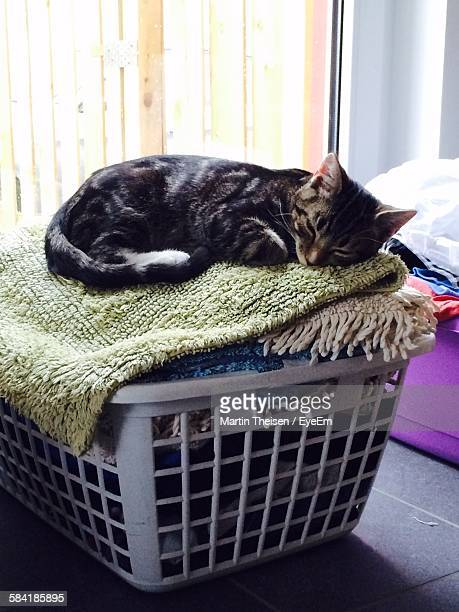 cat laundry stock photos and pictures getty images