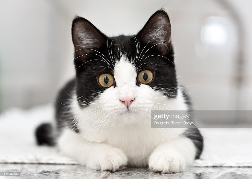 Cat resting on the floor : Stock Photo