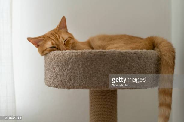 cat rests in a cat tower - tower stock pictures, royalty-free photos & images