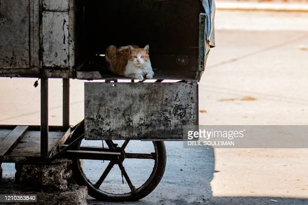 Cat rests in a compartment of an off-duty grills food cart in the center of Qamishli city, in Syria's northeastern Hasakeh province, on April 18 amid...