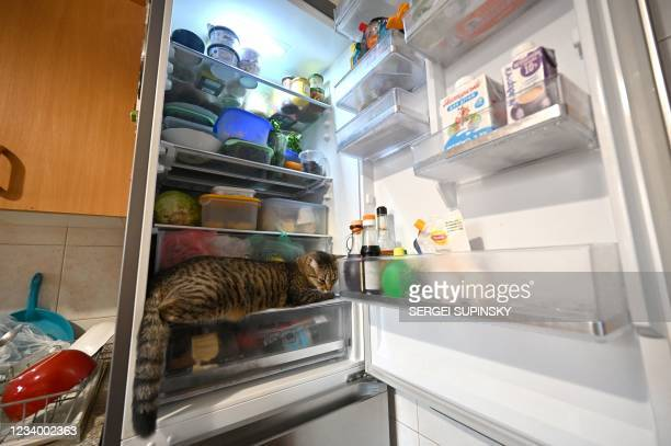 Cat rests in a refrigerator in it owner's flat as it jumped in to cool down during a heat wave in the Ukrainian capital Kiev on July 16, 2021.
