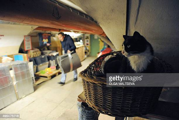 A cat rests in the basement of the State Hermitage Museum in St Petersburg on October 14 2015 The Hermitage's cats guard the museum's artworks from...