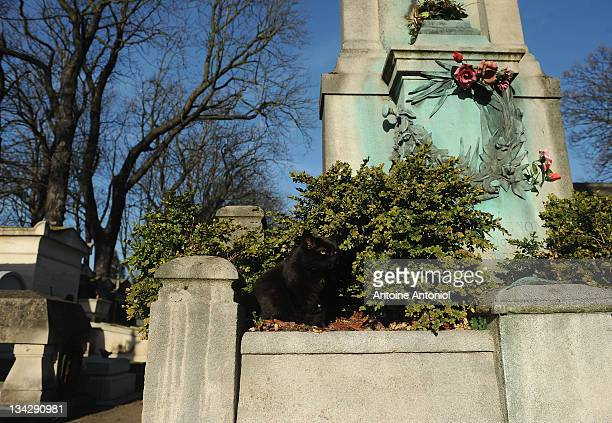 A cat rests on a grave at Cimetierre du Pere Lachaise on November 29 2011 in Paris France