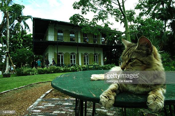 A cat rests on a table in the garden of American author Ernest Hemingway''s home June 15 1999 in Key West Florida
