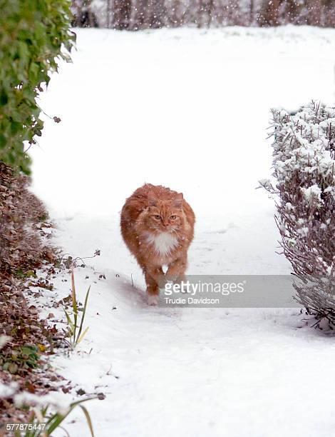 Cat running in snow