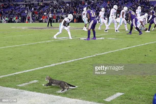 A cat runs on the field during the fourth quarter of the game between the Baltimore Ravens and the Miami Dolphins at MT Bank Stadium on October 26...
