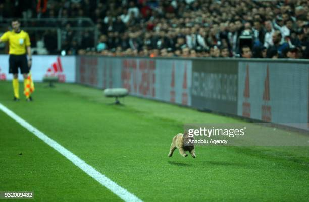A cat runs on the field during the UEFA Champions League Round 16 return match between Besiktas and FC Bayern Munich at Vodafone Park in Istanbul...