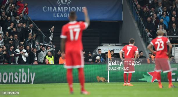 A cat runs on the pitch during the second leg of the last 16 UEFA Champions League football match between Besiktas and Bayern Munich at Besiktas Park...
