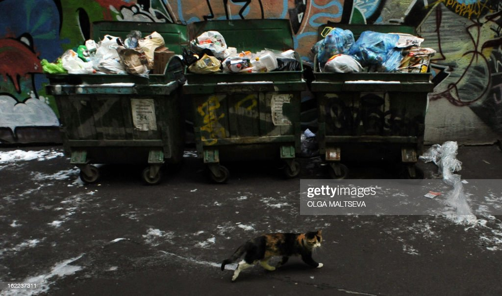 A cat runs past trash boxes in a courtyard in Russia's second city of St. Petersburg, on February 20, 2013.