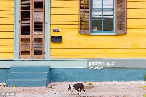 Cat safe at home alert and watching dog pass on sidewalk in Faubourg Marigny historic district of New Orleans USA