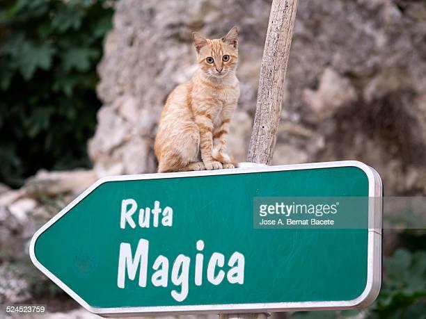 Cat sat on an arrow sign on the street