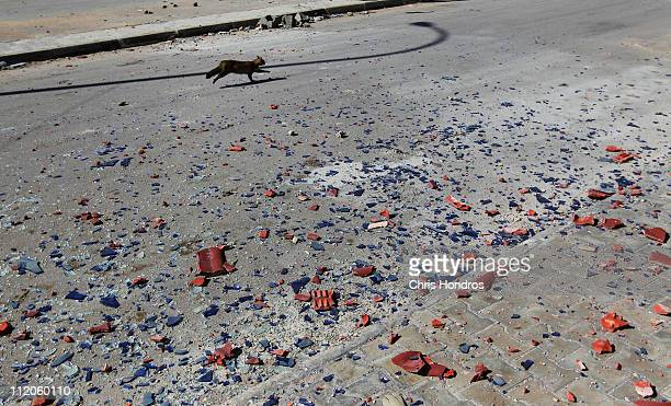 A cat scampers down an empty street near debris from recent fighting between Libyan Army forces and rebels April 12 2011 near the west gate of...