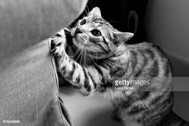 cat scratching sofa - scratching stock pictures, royalty-free photos & images