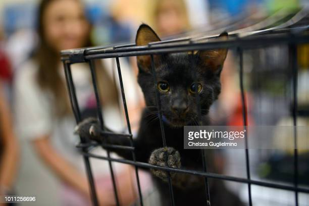 A cat seen in the adoption center at CatCon Worldwide 2018 at Pasadena Convention Center on August 4 2018 in Pasadena California