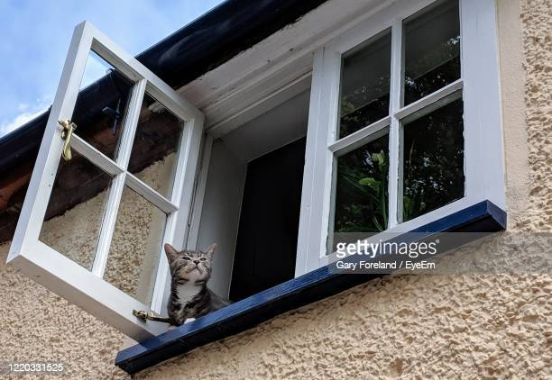 cat seen through window of house - domestic cat stock pictures, royalty-free photos & images