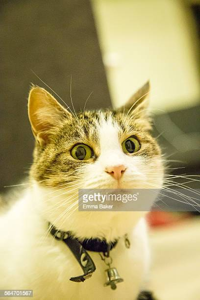cat selfie - emma baker stock pictures, royalty-free photos & images