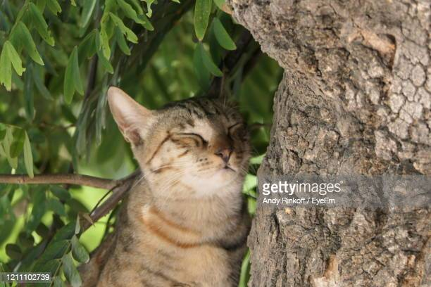 cat shading in a tree - andy rinkoff stock pictures, royalty-free photos & images