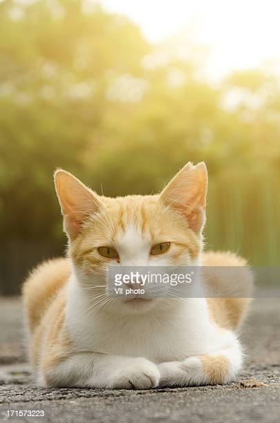 cat sit on ground and looking at you