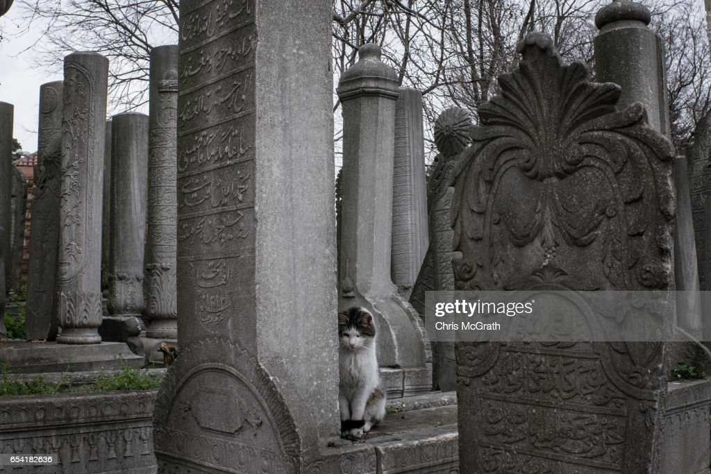 A cat sits amongst grave stones in the Eyup cemetary on March 16, 2017 in Istanbul, Turkey. Turkey will hold its constitutional referendum on April 16, 2017. Turks will vote on 18 proposed amendments to the Constitution of Turkey. The controversial changes seek to replace the parliamentary system and move to a presidential system which would give President Recep Tayyip Erdogan executive authority.