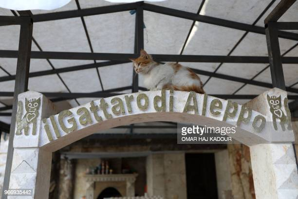 A cat sits at the entrance of the sleeping area of Ernesto's Cat Sanctuary in Kfar Naha an oppositionheld town in Aleppo province in Syria on March...