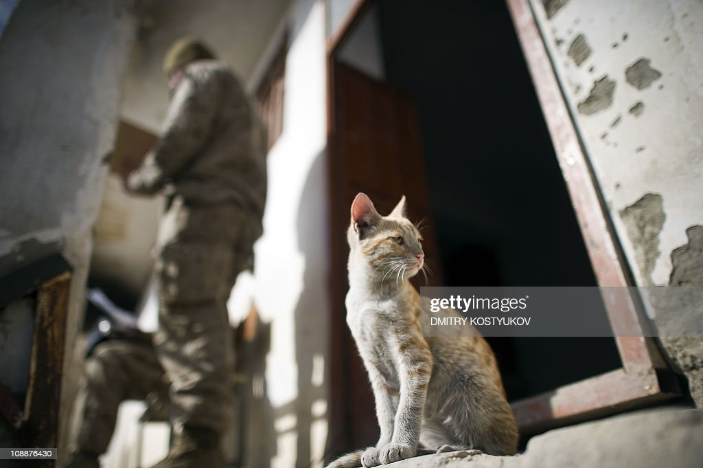 A cat sits by a house as US Marines from : News Photo