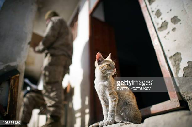 A cat sits by a house as US Marines from 1st Battalion 8th Marines speak to each other at the Musa Qala District Center base on January 16 2011 AFP...