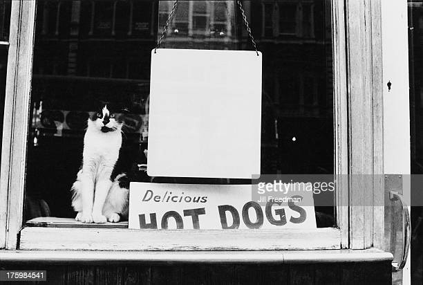 A cat sits in a cafe window next to a sign advertising 'Delicious Hot Dogs' London 1969