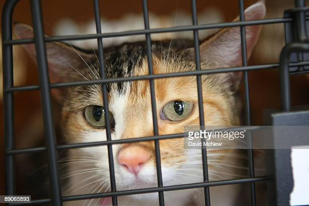 A cat sits in its crate before the southern California maiden voyage of Pet Airways on July 16 2009 in the Los Angelesarea city of Hawthorne...