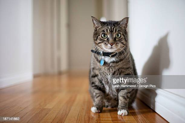 A Cat Sits In The Hallway Of A Home