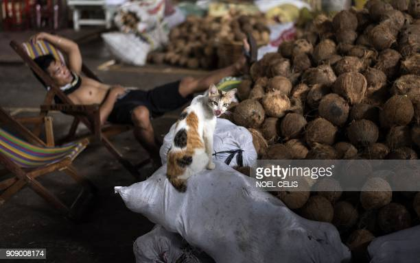 A cat sits on a sack of coconuts as a worker takes a rest at a market in Manila on January 23 2018 An estimated 10 million Filipinos work overseas...