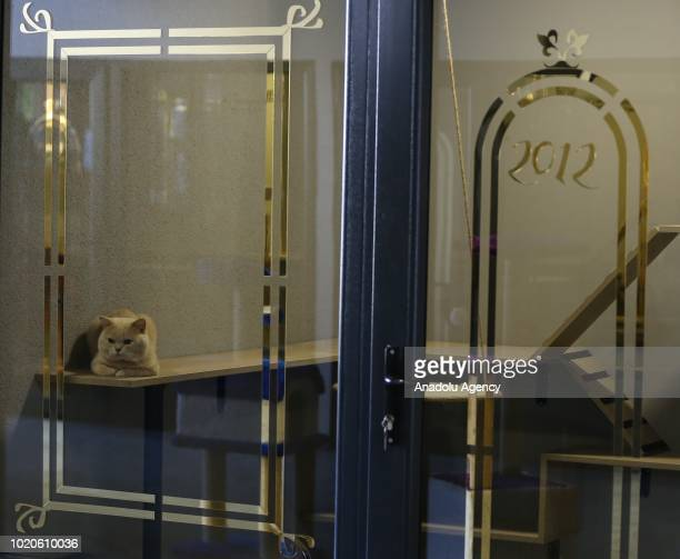 A cat sits on a shelf at a Cat Pet Hotel in Bursa Turkey on August 21 2018 Hotel has total of 32 separate standard luxury and suit rooms for each cat...