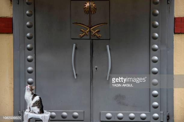 TOPSHOT A cat sits on a stool at the doors of the Saudi Arabian consulate in Istanbul on October 13 2018 A delegation of a dozen Saudi officials was...
