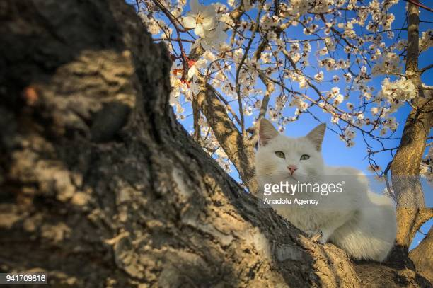 A cat sits on a tree in northeast of Lake Van near Citoren neighbourhood in Tusba district of Van Turkey during spring season on April 04 2018