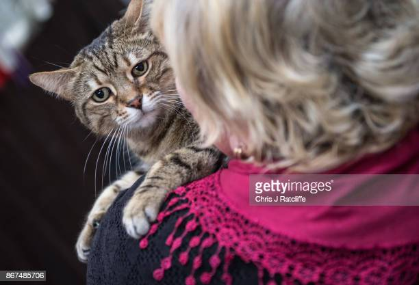 A cat sits on its owner's shoulder during the Supreme Cat Show on October 28 2017 in Birmingham England The oneday Supreme Cat Show is one of the...