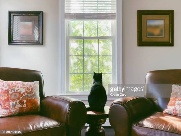 cat sits on table - symmetry stock pictures, royalty-free photos & images