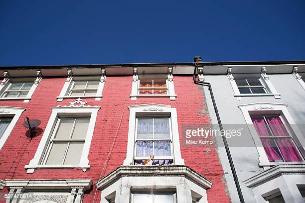 Cat sits on the window ledge of residential terraced housing in Brixton London UK This is a typical street with homes of dofferent eras along a...