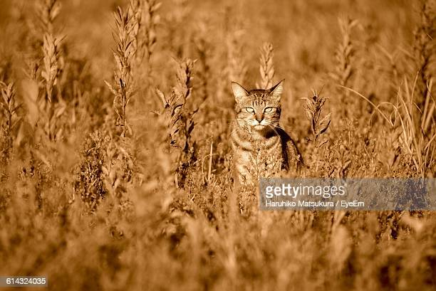 Cat Sitting Amidst Dry Plants On Field