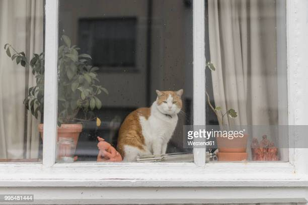 cat sitting behind window of a residential house - window sill stock pictures, royalty-free photos & images