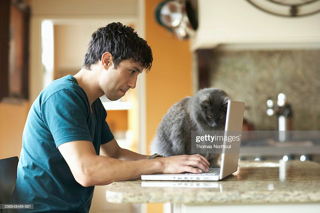 Cat sitting beside man using laptop in domestic kitchen, side view : Stock Photo
