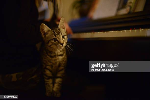 a cat sitting by a girl, playing piano - piano key stock photos and pictures