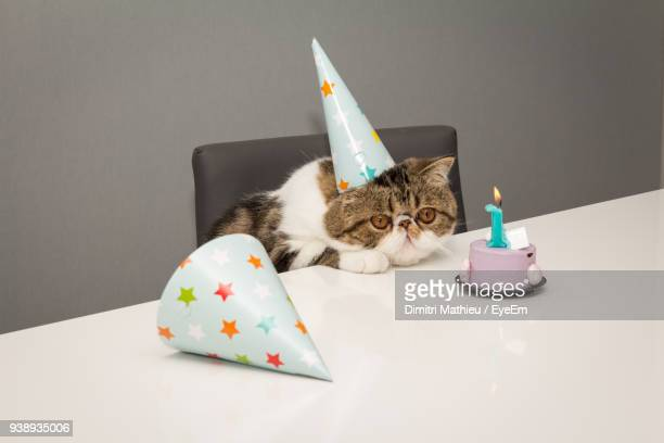 cat sitting by cake on table at home - happy birthday cat stock photos and pictures