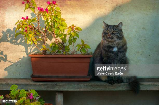 cat sitting by potted plant on wood - walter ciceri foto e immagini stock