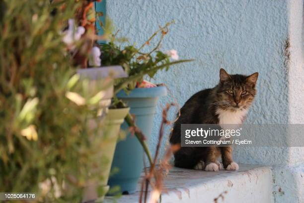 cat sitting by potted plants - steven cottingham - fotografias e filmes do acervo