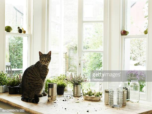 Cat sitting by potting plants