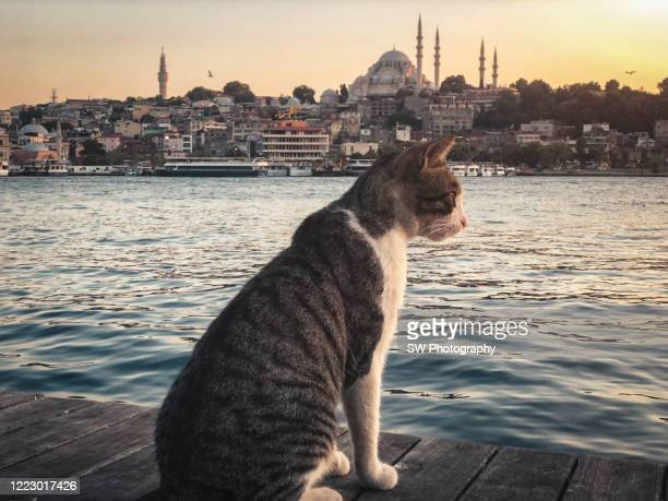 cat sitting by the river in istanbul - istanbul stock pictures, royalty-free photos & images