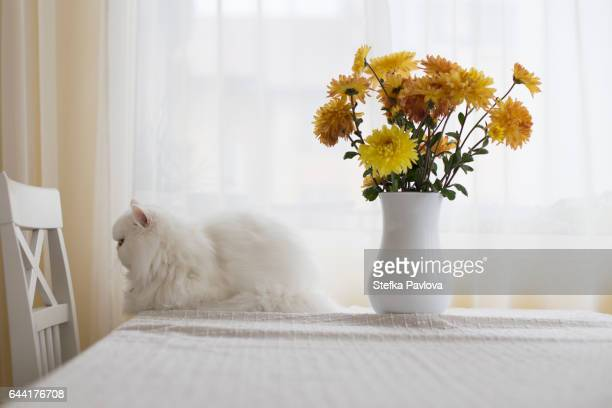 Cat Sitting By Vase On Table