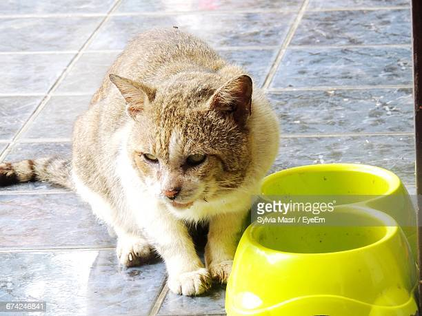 Cat Sitting By Yellow Bowls On Floor At Home